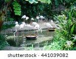 flamingo | Shutterstock . vector #441039082