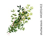 watercolor hand drawn thyme.... | Shutterstock . vector #441051412
