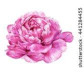 watercolor hand drawn...   Shutterstock . vector #441284455