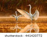 The Dance Lesson Great Egret...
