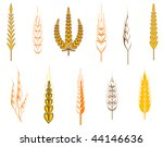 Ripe wheat ears as an agriculture concept - also as emblem or logo template. Jpeg version is also available - stock vector