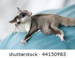 Possum On Shoulder Of Doctor I...