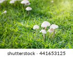 Mushroom  Group Of Poisonous...
