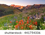 Summer Wildflowers In The...