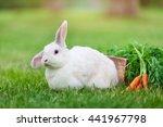 Cute White Dwarf Rabbit With A...