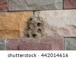 Small photo of Hornet's nest built on a stone wall. For instance children living at pupate. After the ball was flying standby to fly out to leave the nest.