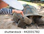 Woman Touches Aldabran...