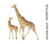 watercolor giraffe family. two... | Shutterstock . vector #442097416
