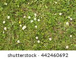 grass backdrop from an overhead ... | Shutterstock . vector #442460692