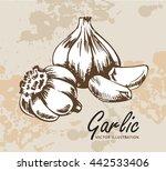 Hand Drawn Garlic Illustration...