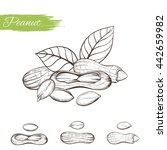 set of vector sketches of... | Shutterstock .eps vector #442659982