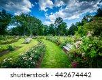 Stock photo rose gardens at elizabeth park in hartford connecticut 442674442