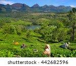 Kerala  India   Dec. 15 2011 ...