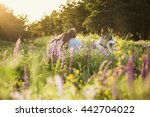 Stock photo couple in love with a dog husky malamute sunset forest 442704022