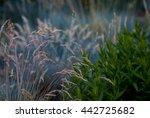flowers  plants | Shutterstock . vector #442725682