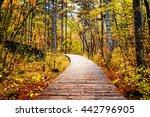Wooden Boardwalk Through Autum...