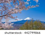 fuji mountain and cherry... | Shutterstock . vector #442799866