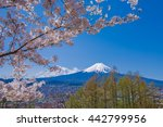 fuji mountain and cherry... | Shutterstock . vector #442799956