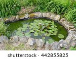 Pond in garden with water lilies
