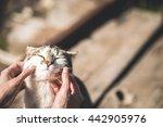 Cute Cat Receiving Some Love