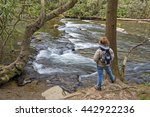 hiking along abrams creek at... | Shutterstock . vector #442922236