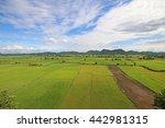 rice farm  rice field in... | Shutterstock . vector #442981315