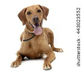 Brown Mixed Breed Dog In A...