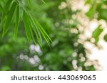 natural view of green leaves... | Shutterstock . vector #443069065