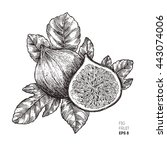 Fig Fruit Illustration. ...