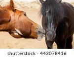 horses on nature  portrait of a ... | Shutterstock . vector #443078416