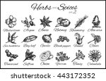 herbs and spices collection... | Shutterstock .eps vector #443172352