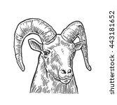 goat head isolated on white... | Shutterstock .eps vector #443181652