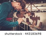 Young Farmer And Calf In The...