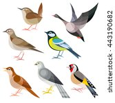 wild birds of europe   wren ... | Shutterstock .eps vector #443190682