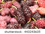 berry mulberry trees as a... | Shutterstock . vector #443243635
