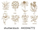 shea tree  echinacea  artichoke ... | Shutterstock .eps vector #443346772