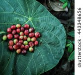 coffee cherries from thailand... | Shutterstock . vector #443348656
