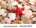 Sea Red Star  Sinks And Pebble...