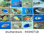 set of 16 tropical fishes close ... | Shutterstock . vector #44340718