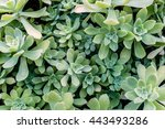 Background Of Green Succulent...