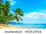 beautiful sunny beach. view of... | Shutterstock . vector #443513926
