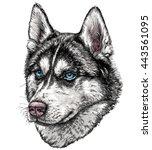 sketch of husky dog. vector...   Shutterstock .eps vector #443561095