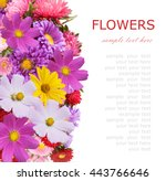 aster and chamomile flowers... | Shutterstock . vector #443766646