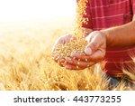 close up of senior farmers... | Shutterstock . vector #443773255