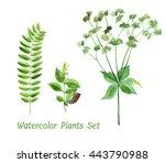 watercolor set of green plants. ...   Shutterstock . vector #443790988