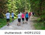 pokljuka  slovenia  06.25.2016  ... | Shutterstock . vector #443911522