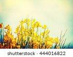 summer flower background. | Shutterstock . vector #444016822