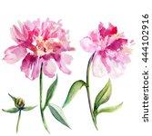 Watercolor Peony Flower  Bud...
