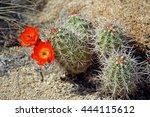 Beautiful Blooming Wild Desert...