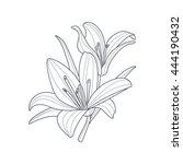 two lilies flower monochrome... | Shutterstock .eps vector #444190432